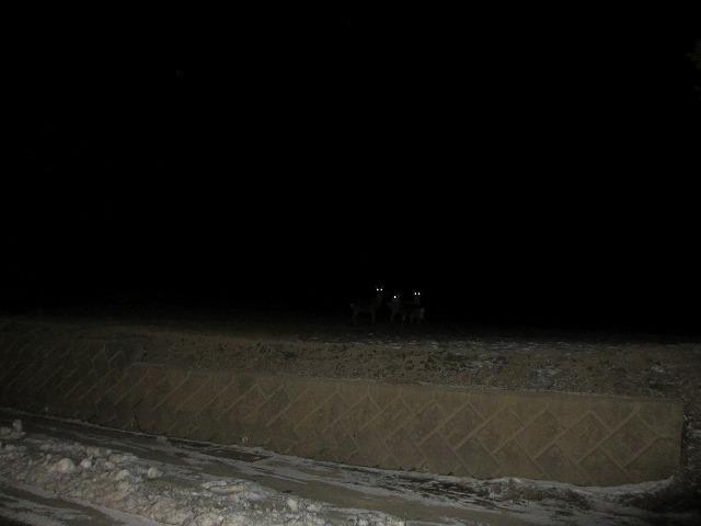 201223夜の鹿 (2)