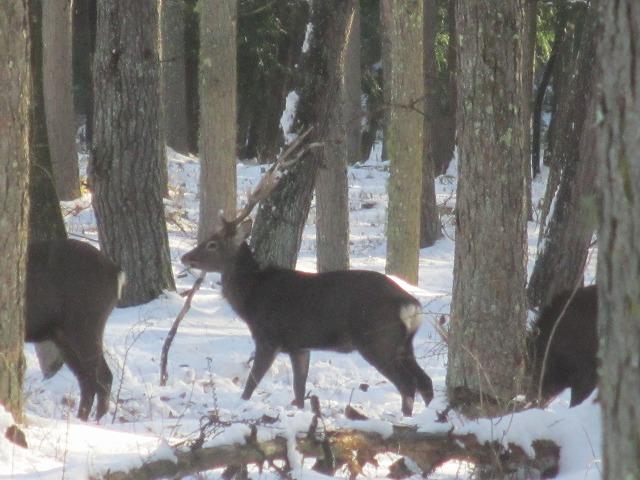 02121229鹿が (5)