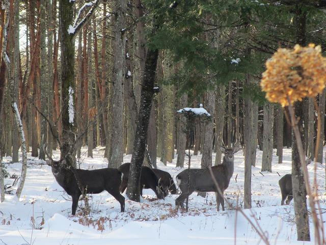 02121229鹿が (8)