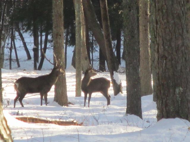 02121229鹿が (16)