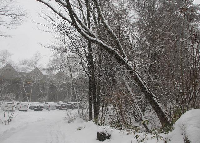 20130114除雪しましょう (5)