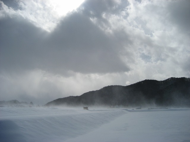 20130125風が強いね (8)