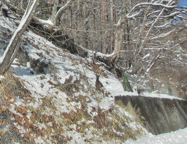 20130213鹿が見えますか (3) - コピー