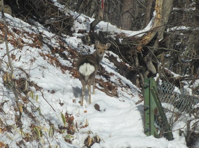 20130213鹿が見えますか (6)