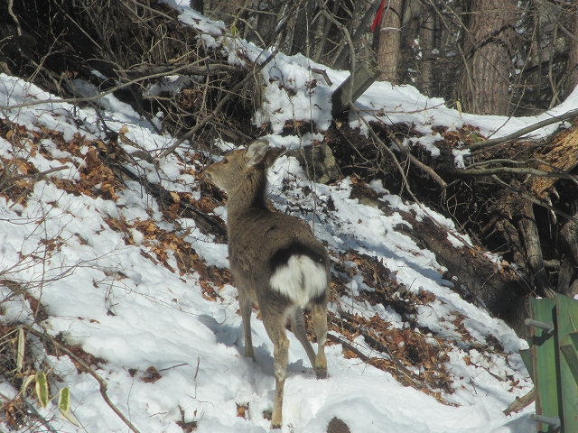 20130213鹿が見えますか (7)