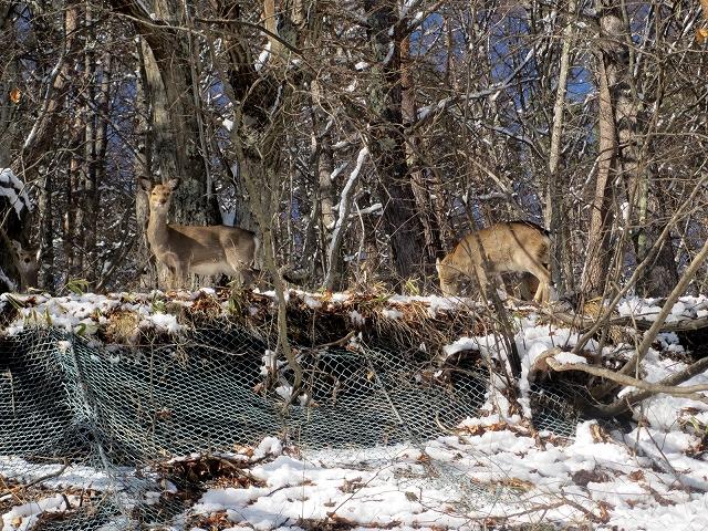 20130213鹿が見えますか (11)