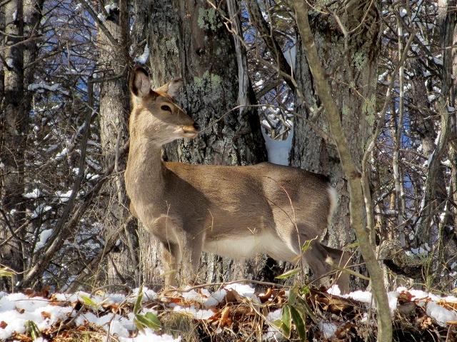 20130213鹿が見えますか (12)