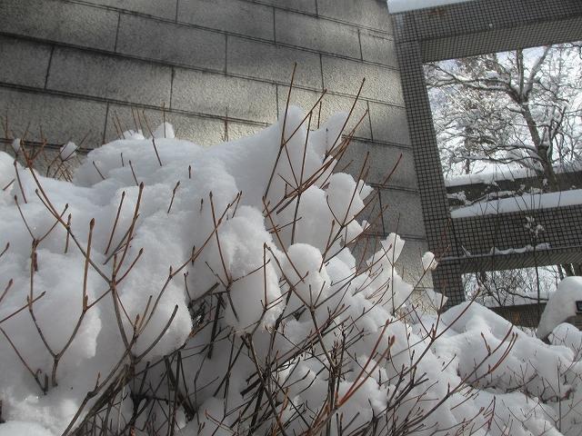 20130216悠心荘の大雪の朝 (8)