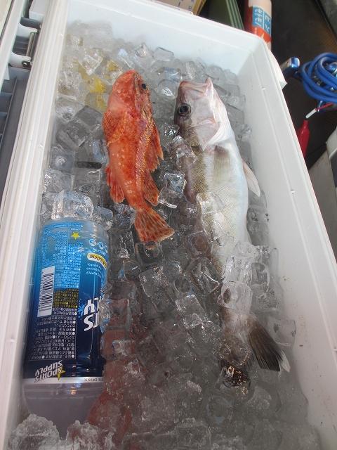 20130220釣りへ (63)