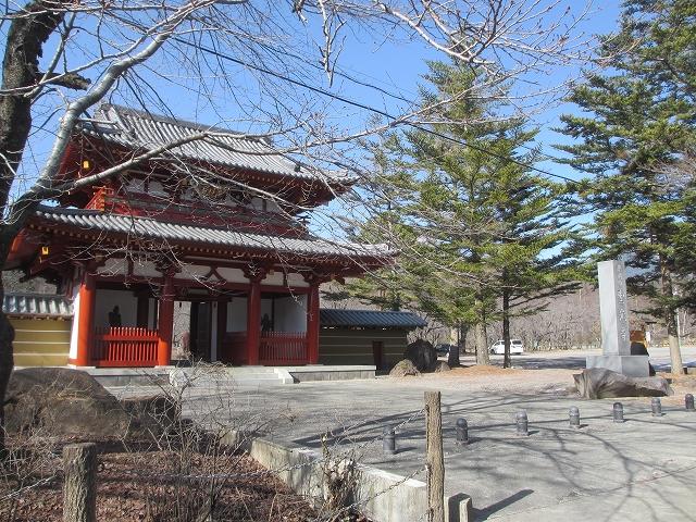 20130319聖光寺の桜のつぼみ (9)