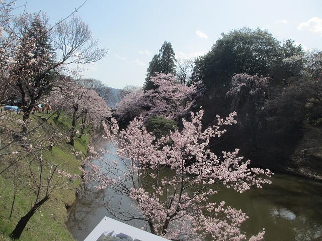 20130405上田千本桜 (61)