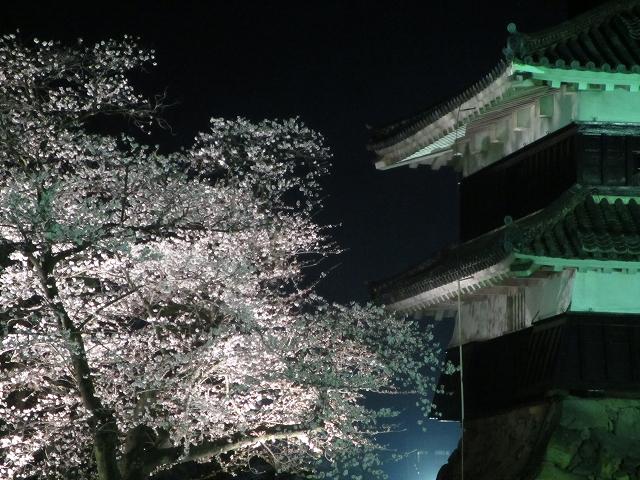 20130405松本城の夜桜前日 (18)