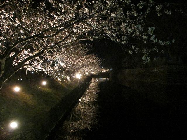 20130405松本城の夜桜前日 (32)