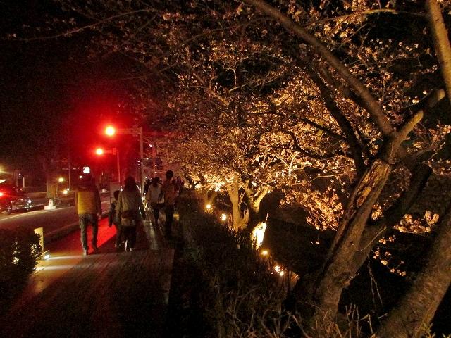 20130405松本城の夜桜前日 (46)