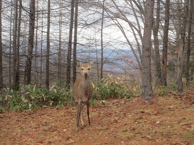 20130406蓼科も雨です 鹿も (5)