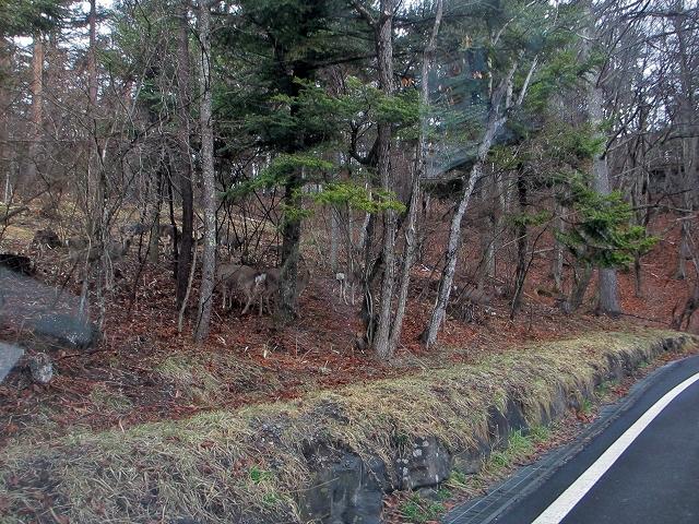 20130406蓼科も雨です 鹿も (10)