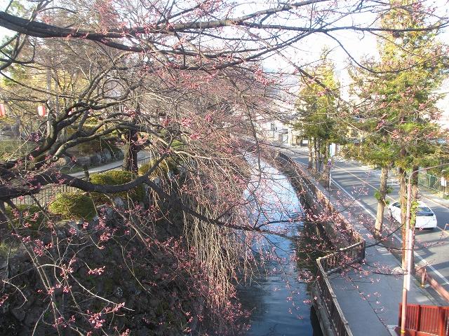 20130404高島城の桜も開花 (3)