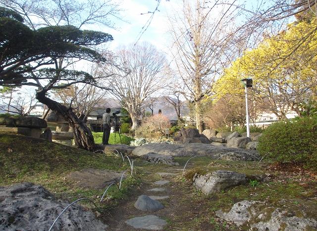 20130404高島城の桜も開花 (6)