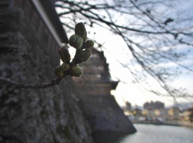 20130404高島城の桜も開花 (13)