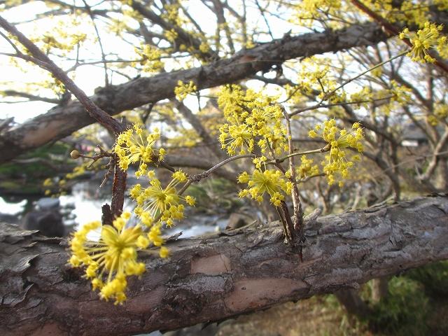 20130404高島城の桜も開花 (17)
