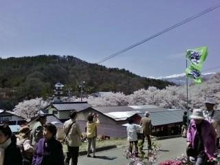 20130409高遠桜 (3)