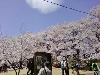 20130409高遠桜 (5)