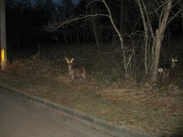 20130416夜の鹿たち (1)