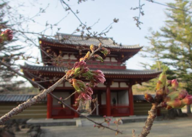 20130419蓼科湖&聖光寺 (6)