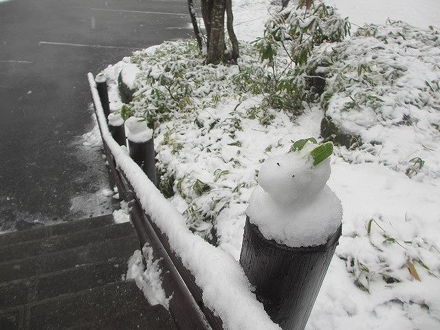 20130421雪うさぎ (11)