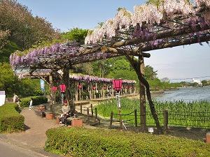 20130420藤枝の蓮華寺池公園 (5)