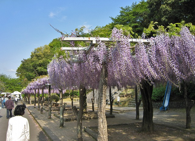 20130420藤枝の蓮華寺池公園 (9)