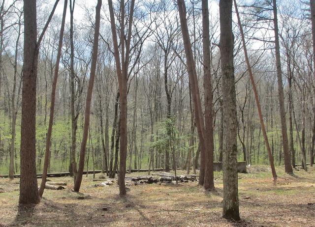 20130427竜神池の木道の新緑