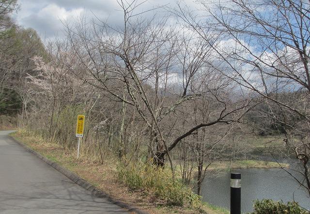 20130427竜神池開花 (1)