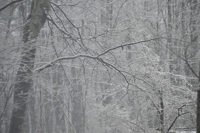 20130421澤井さんから悠心荘の朝の雪 (1)