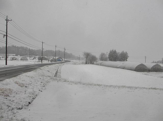 20130421雪の悠心荘 (1)