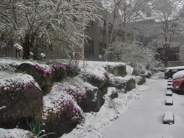20130421雪の悠心荘 (4)