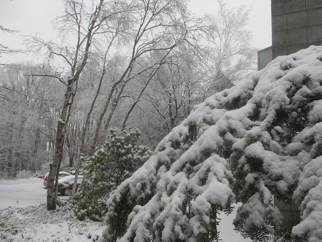 20130421雪の悠心荘 (8)