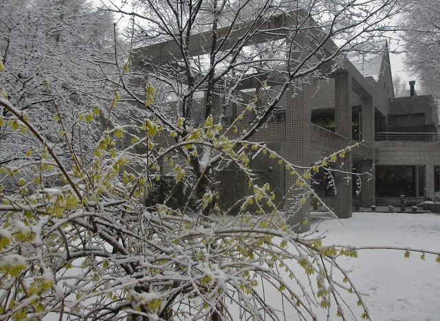 20130421雪の悠心荘 (21)