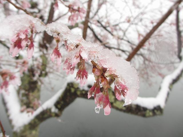 20130421雪の蓼科湖 (8)