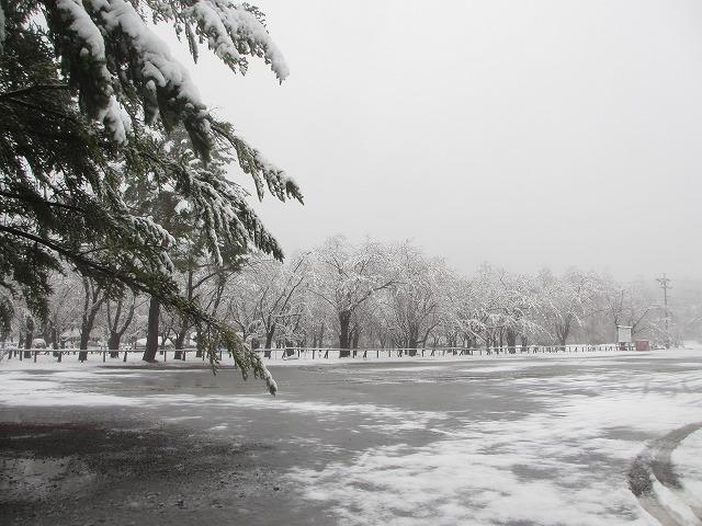 02130421雪の聖光寺 (5)