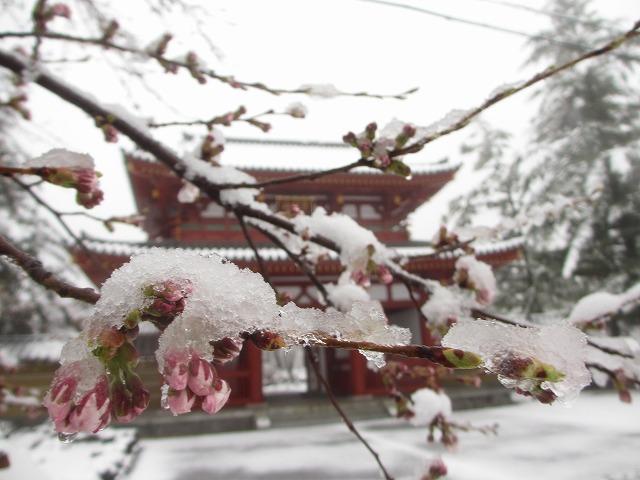 02130421雪の聖光寺 (7)