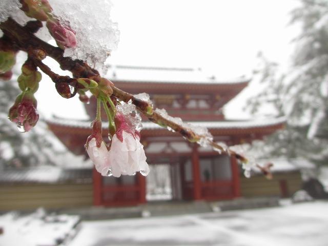 02130421雪の聖光寺 (11)