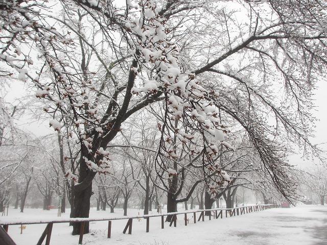 02130421雪の聖光寺 (17)