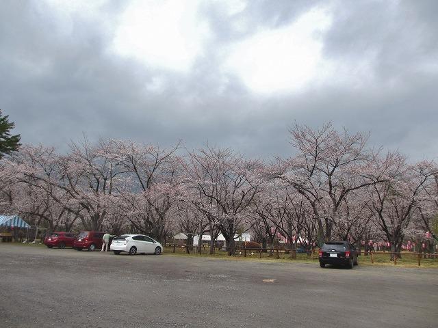20130430聖光寺満開へ (4)