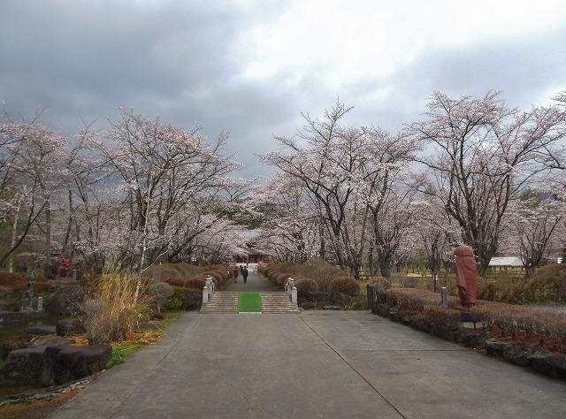 20130430聖光寺満開へ (9)