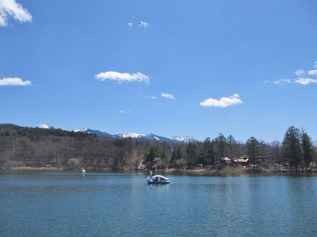 20130503蓼科湖の桜 (11)