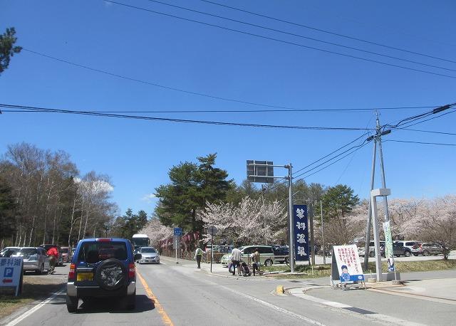 20130503聖光寺の桜満開へ (2)