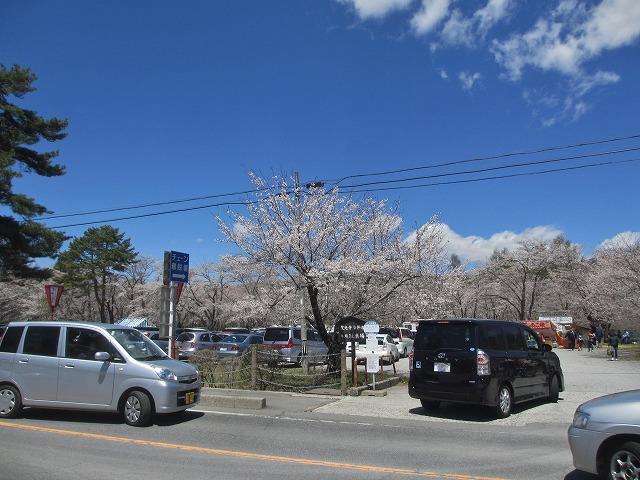 20130503聖光寺の桜満開へ (3)