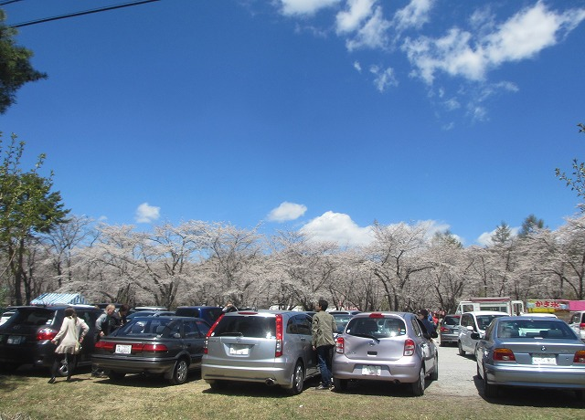20130503聖光寺の桜満開へ (4)