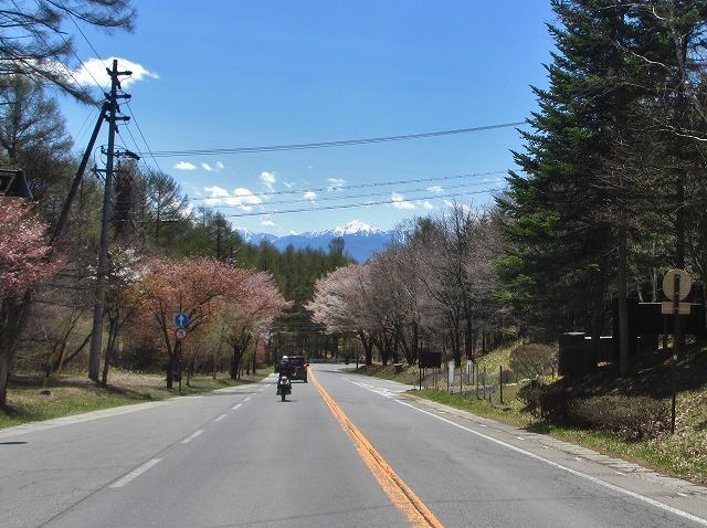 20130503聖光寺の桜満開へ (35)
